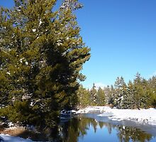 Upper Truckee River in the Winter by Jared Manninen