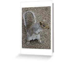 Squirrel at the park Greeting Card