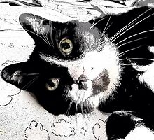 Henry, the Tuxedo Cat by anitalmccormick