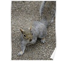Squirrel at the park Poster