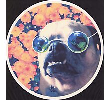 The Grooviest Pug on Earth Photographic Print