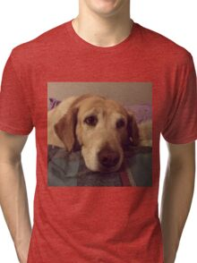 Gracie the Lab Retriever 2 Tri-blend T-Shirt