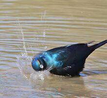 Glossy Starling - Blurred Joy - African Wild Bird Background by LivingWild