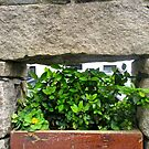 Irish Flowers #2 by Shulie1