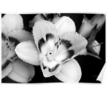 Black and White Lily Flower Poster