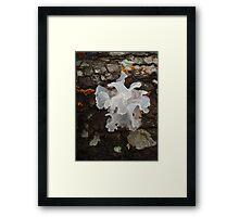 Pretty, frilly fungus (Tremella fuciformis) Framed Print