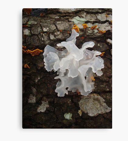 Pretty, frilly fungus (Tremella fuciformis) Canvas Print