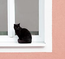 Black Cat in the Window on Coral by BrookeRyanPhoto