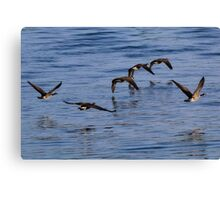 Geese Flying Canvas Print