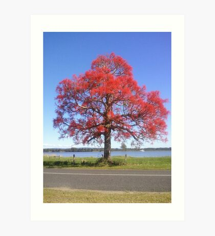 The 'red bubble' tree Art Print