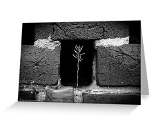 A Single Plant Growing Out Of The Old Red Brick Wall | Upper Brookville, New York  Greeting Card