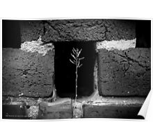 A Single Plant Growing Out Of The Old Red Brick Wall   Upper Brookville, New York  Poster