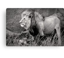King of beasts – Black & White version Canvas Print