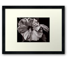 Rose Mallow Bloom Framed Print