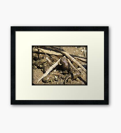 Toad-letts Framed Print