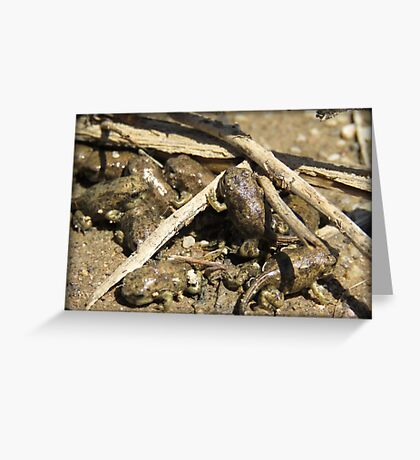 Toad-letts Greeting Card