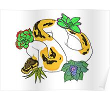 Pied Ball Python with Succulents Poster