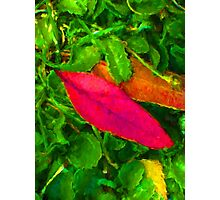 Pink Leaf on the Ground Photographic Print