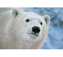 Face of a cub Photographic Print