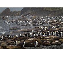 King Penguin & Elephant Seal Beach  Photographic Print