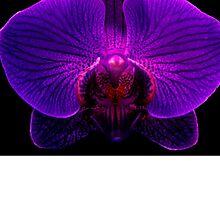 Orchidaceous by ©Ashley Edmonds Cooke