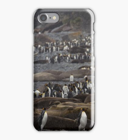 King Penguin & Elephant Seal Beach  iPhone Case/Skin