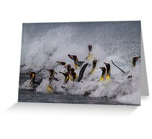 King Penguin Arrival Greeting Card