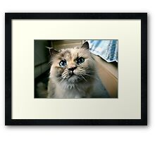 Willow the Wise Framed Print