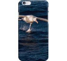 Wandering Albatross Takeoff iPhone Case/Skin