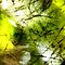 Abstract Impressionism in Nature (Macro Photos of shapes & textures)