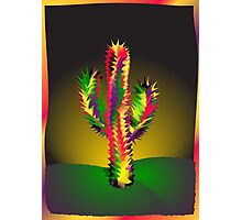 Cactus In Desert Night Photographic Print
