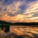 Coming in to Roost by Kathy Weaver