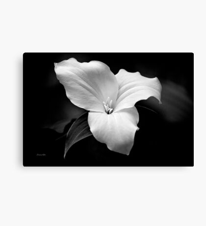 Black and White Trillium Flower Canvas Print