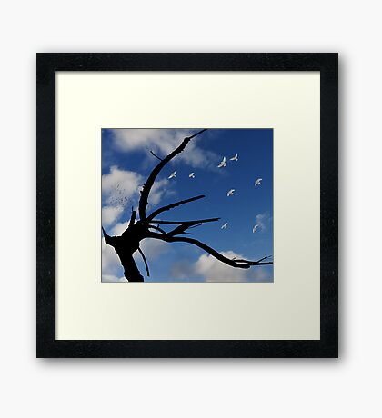 The playful rotten tree Framed Print