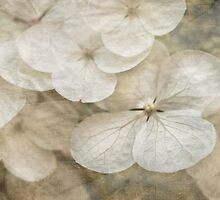 Hydrangeas & lace by Celeste Mookherjee