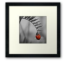 Lady Luck Framed Print