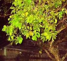Green July Oranges at night in old tree by Haunted House by alan barbour