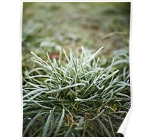 Grass covered with frost Poster