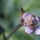 Hosta Buds by Linda  Makiej