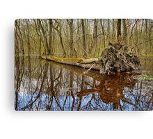 Hornbeam forest and swamp Canvas Print