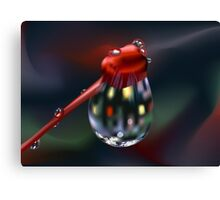 Water Drop on Bud Canvas Print