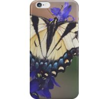 Tiger swallowtail butterfly iPhone Case/Skin