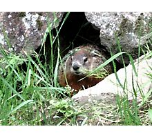 Woodchuck Chuck Photographic Print