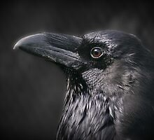 'Nevermore' by Thea 65
