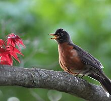 Robin's Song by Gilda Axelrod