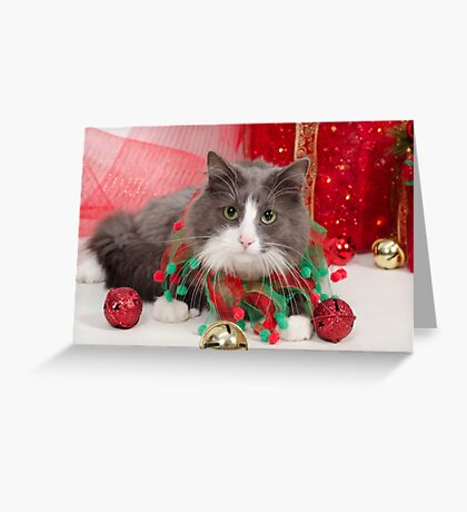 Have a Purrrrfect Christmas Greeting Card