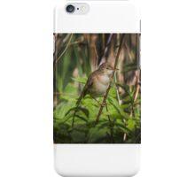 Reed Warbler iPhone Case/Skin