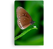 Amazing Brown Butterfly Canvas Print