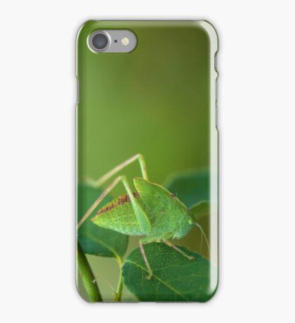 Young Bush-Cricket 1 iPhone Case/Skin