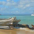 Driftwood in Paradise by Graeme  Hyde